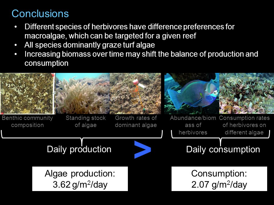 Benthic community composition Standing stock of algae Growth rates of dominant algae Abundance/biom ass of herbivores Consumption rates of herbivores on different algae Daily production Daily consumption > Consumption: 2.07 g/m 2 /day Algae production: 3.62 g/m 2 /day Different species of herbivores have difference preferences for macroalgae, which can be targeted for a given reef All species dominantly graze turf algae Increasing biomass over time may shift the balance of production and consumption Conclusions