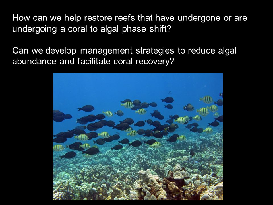 How can we help restore reefs that have undergone or are undergoing a coral to algal phase shift.