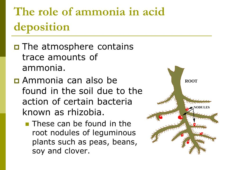 The role of ammonia in acid deposition  The atmosphere contains trace amounts of ammonia.