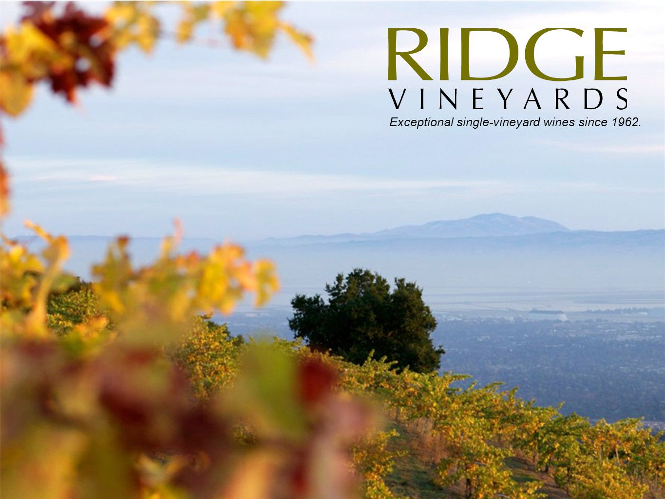 Exceptional single-vineyard wines since 1962.