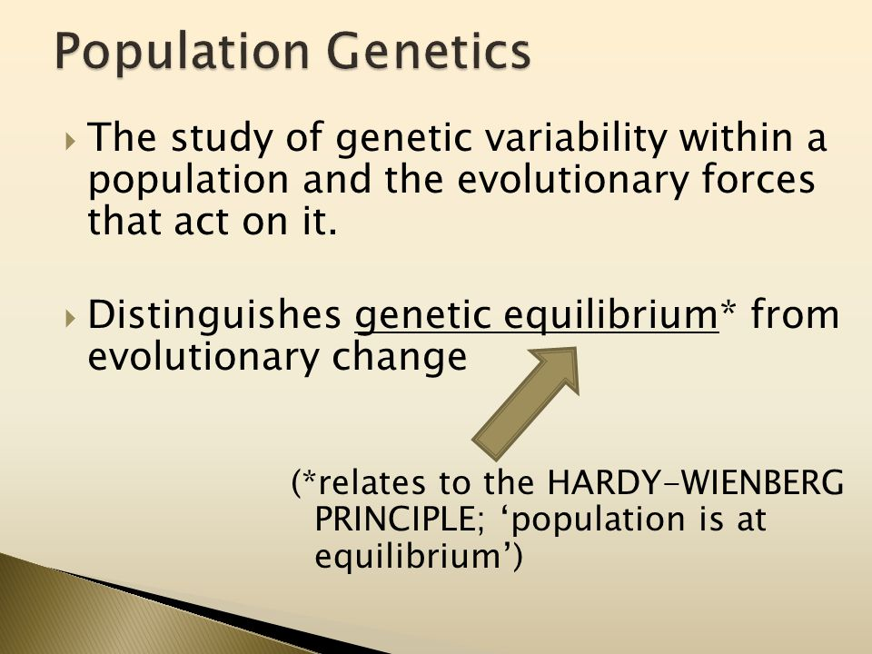  The study of genetic variability within a population and the evolutionary forces that act on it.