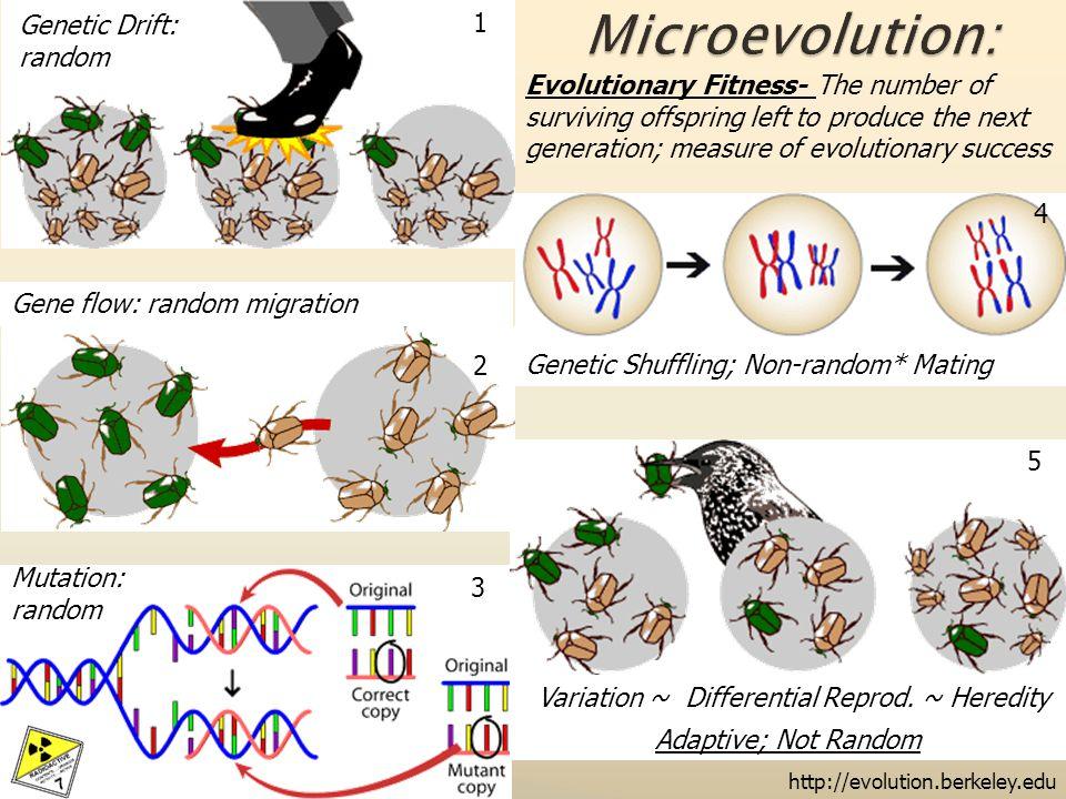 Genetic Drift: random Gene flow: random migration http://evolution.berkeley.edu Mutation: random Variation ~ Differential Reprod.