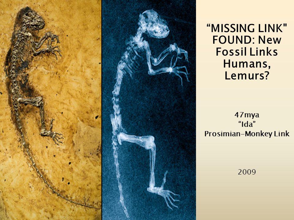 MISSING LINK FOUND: New Fossil Links Humans, Lemurs? 47mya Ida Prosimian-Monkey Link 2009