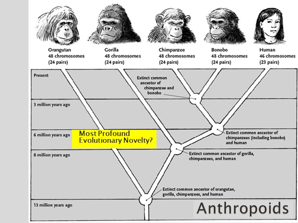 -Ability to walk upright -6mya Most Profound Evolutionary Novelty?