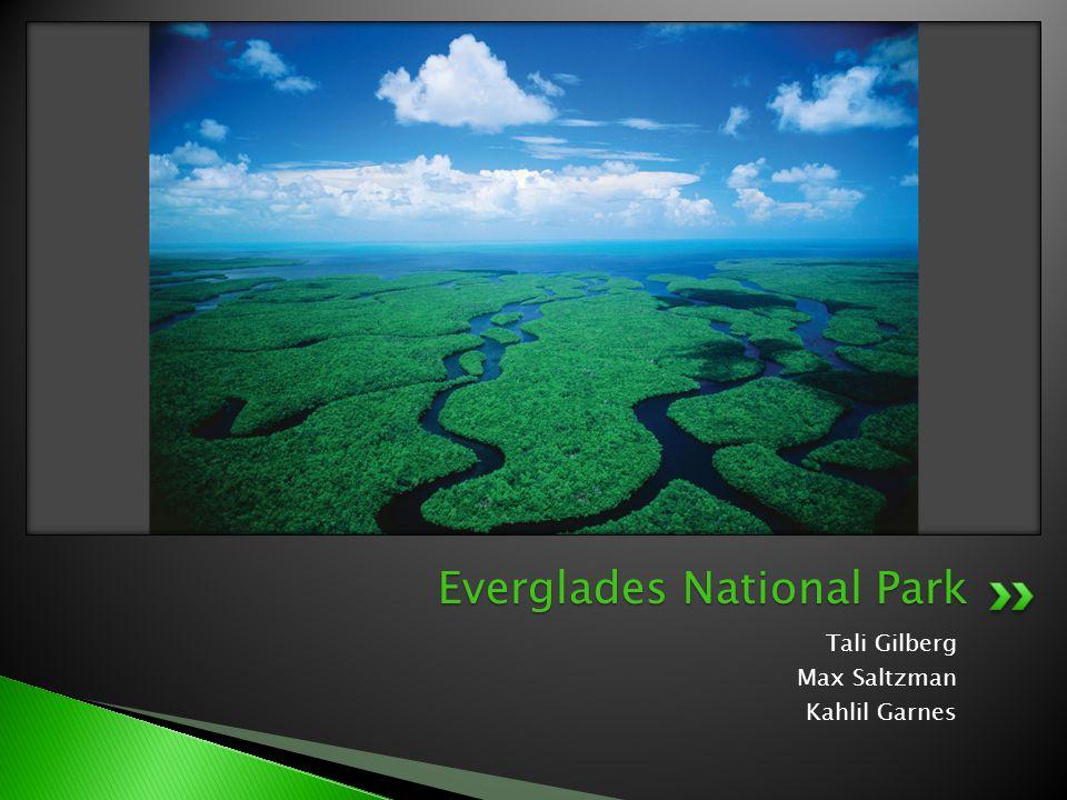 Tali Gilberg Max Saltzman Kahlil Garnes Everglades National Park