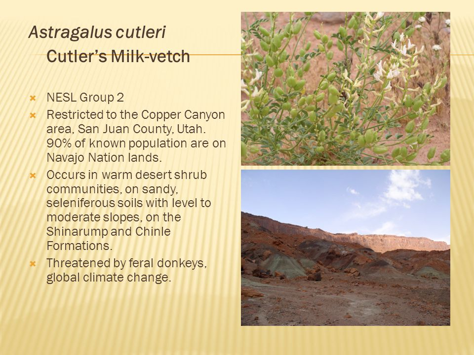 Astragalus cutleri Cutler's Milk-vetch  NESL Group 2  Restricted to the Copper Canyon area, San Juan County, Utah.