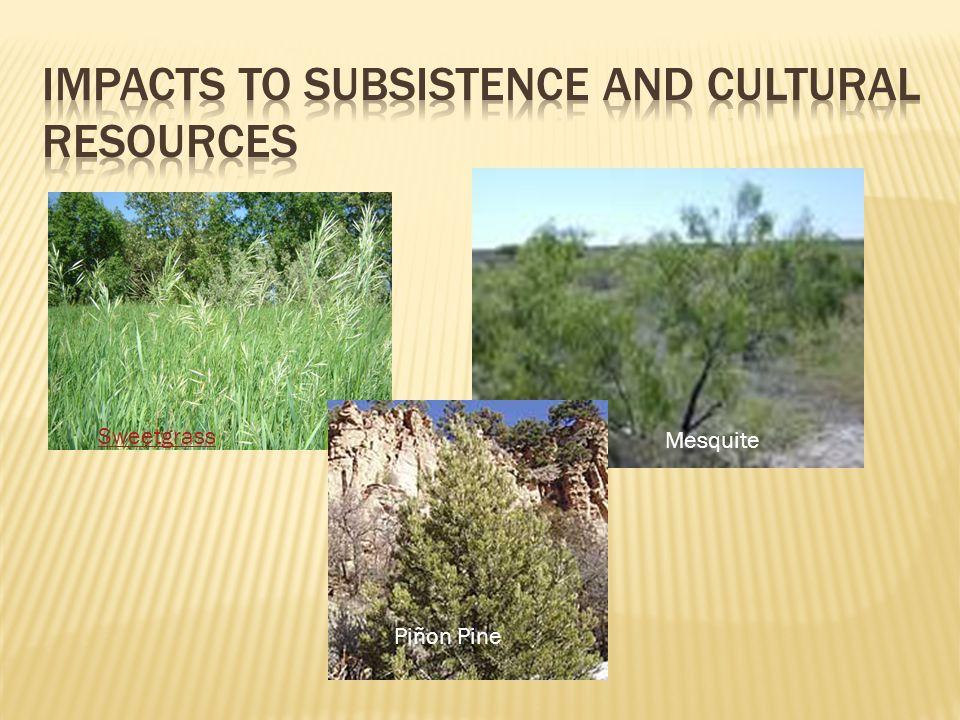 Mesquite Sweetgrass Piñon Pine