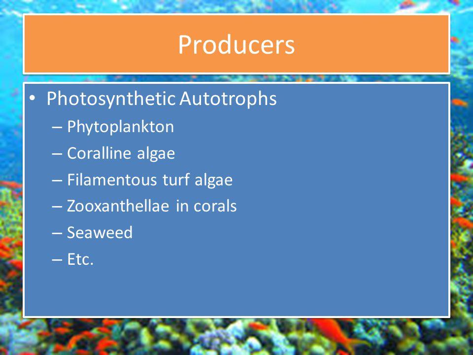 Producers Photosynthetic Autotrophs – Phytoplankton – Coralline algae – Filamentous turf algae – Zooxanthellae in corals – Seaweed – Etc.