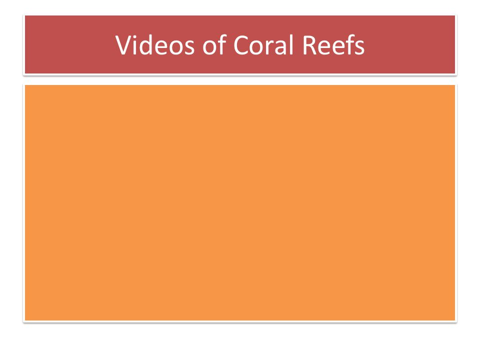 Videos of Coral Reefs