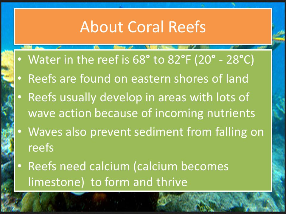 About Coral Reefs Water in the reef is 68° to 82°F (20° - 28°C) Reefs are found on eastern shores of land Reefs usually develop in areas with lots of