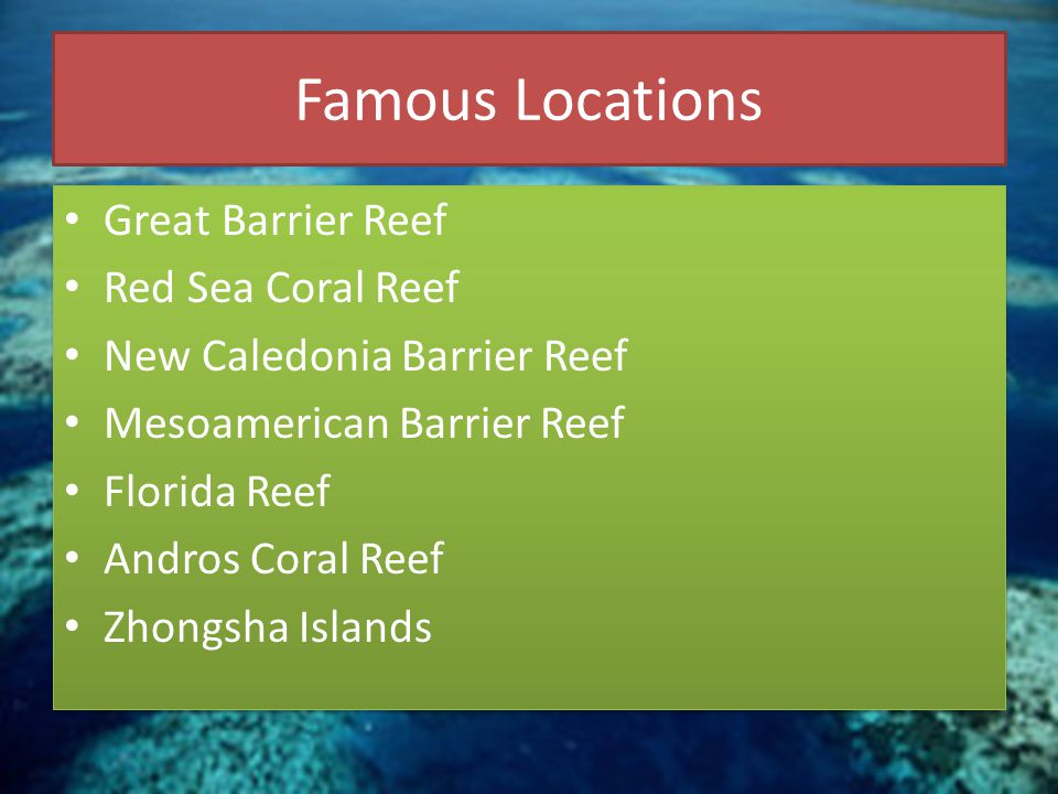 Famous Locations Great Barrier Reef Red Sea Coral Reef New Caledonia Barrier Reef Mesoamerican Barrier Reef Florida Reef Andros Coral Reef Zhongsha Is