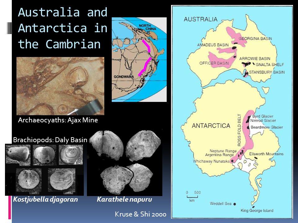 Australia and Antarctica in the Cambrian Archaeocyaths: Ajax Mine Kruse & Shi 2000 Kostjubella djagoran Karathele napuru Brachiopods: Daly Basin