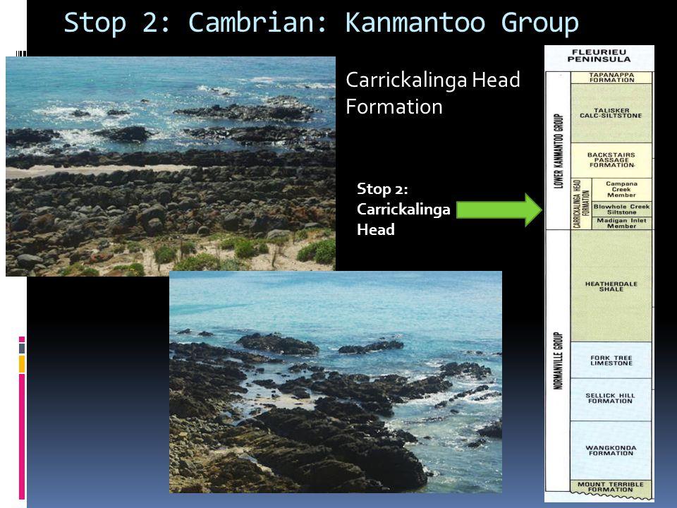 Stop 2: Cambrian: Kanmantoo Group Stop 2: Carrickalinga Head Formation
