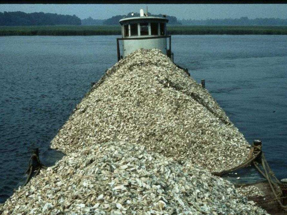 Shellfish Season – Sep 16 – May 15