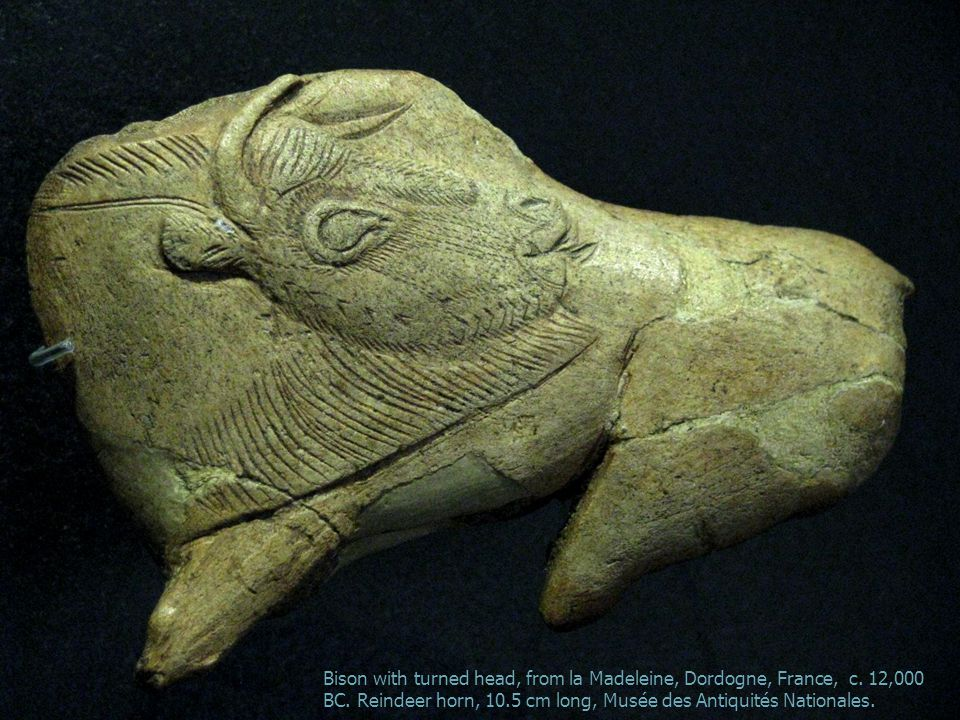 Bison with turned head, from la Madeleine, Dordogne, France, c.