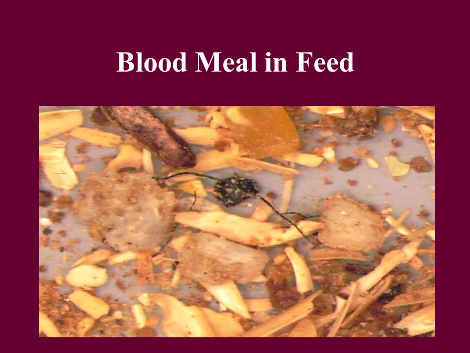Blood Meal in Feed