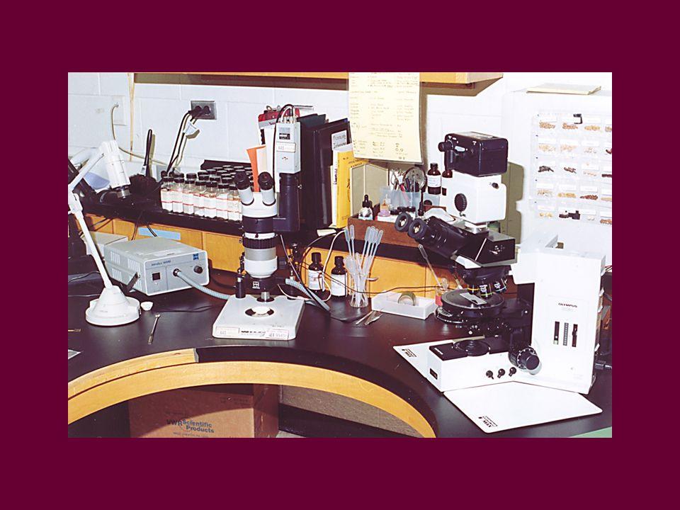 Microscopy Equipment Compound Microscope Steroscopic Microscope Reagents for Spot Tests Accessories
