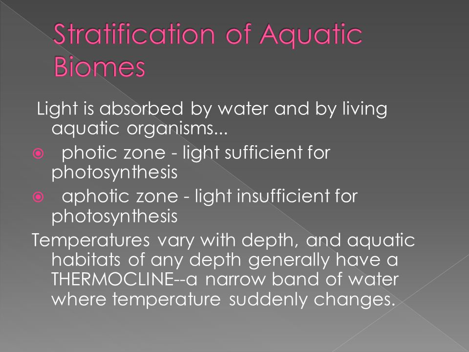 Light is absorbed by water and by living aquatic organisms...