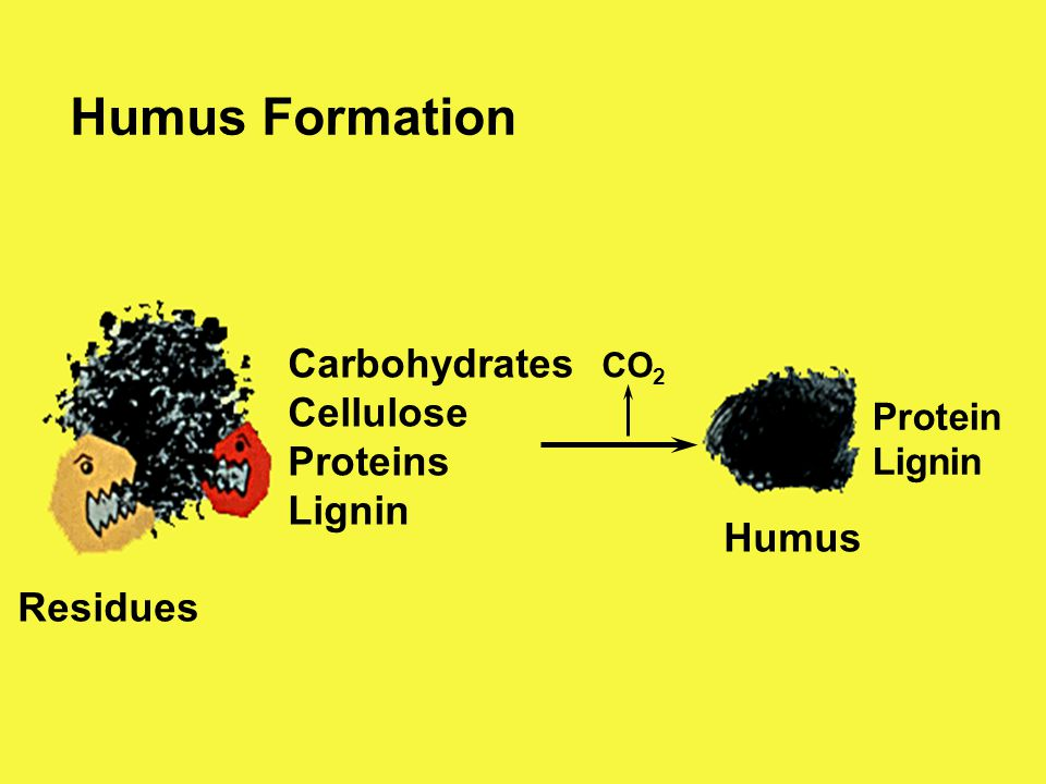 Humus Formation Carbohydrates Cellulose Proteins Lignin Residues Humus CO 2 Protein Lignin