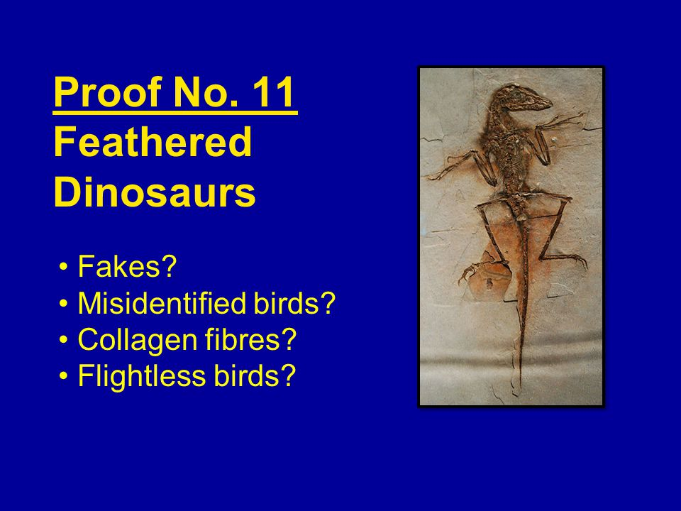 Proof No. 11 Feathered Dinosaurs Fakes Misidentified birds Collagen fibres Flightless birds