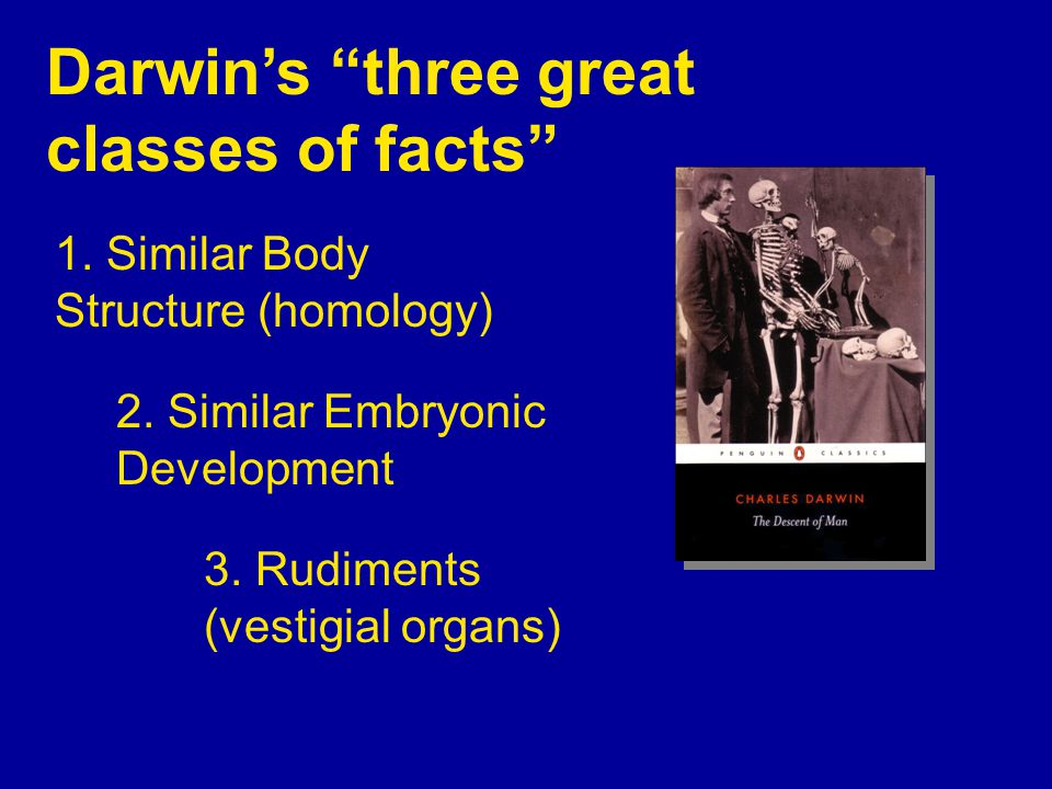 Darwin's three great classes of facts 1. Similar Body Structure (homology) 2.
