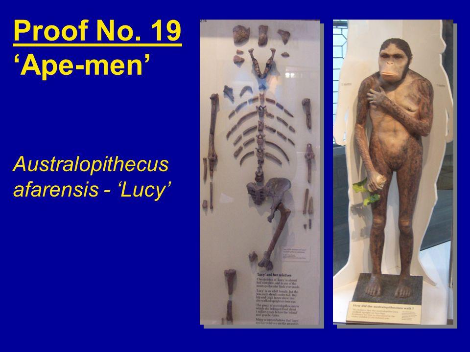 Proof No. 19 'Ape-men' Australopithecus afarensis - 'Lucy'