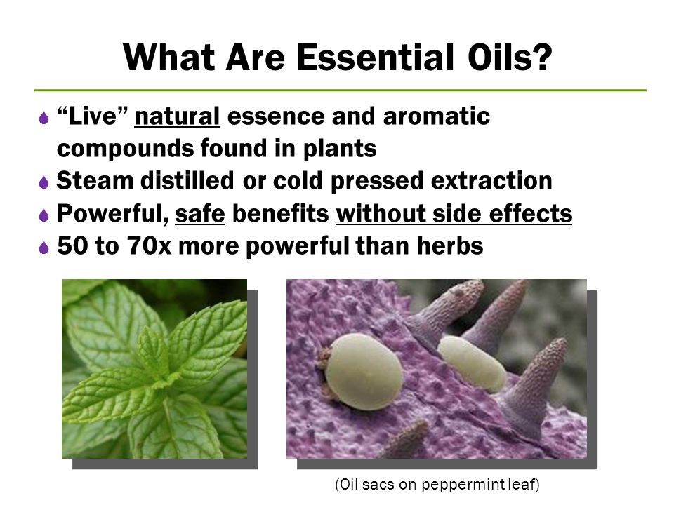 """What Are Essential Oils?  """"Live"""" natural essence and aromatic compounds found in plants  Steam distilled or cold pressed extraction  Powerful, safe"""