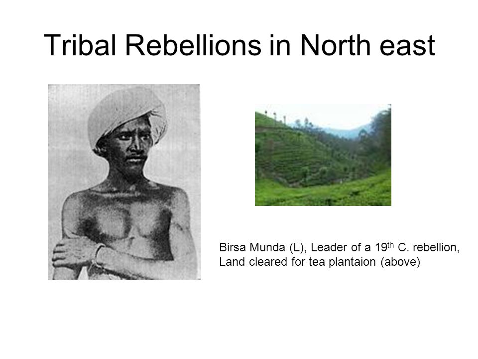 Tribal Rebellions in North east Birsa Munda (L), Leader of a 19 th C. rebellion, Land cleared for tea plantaion (above)