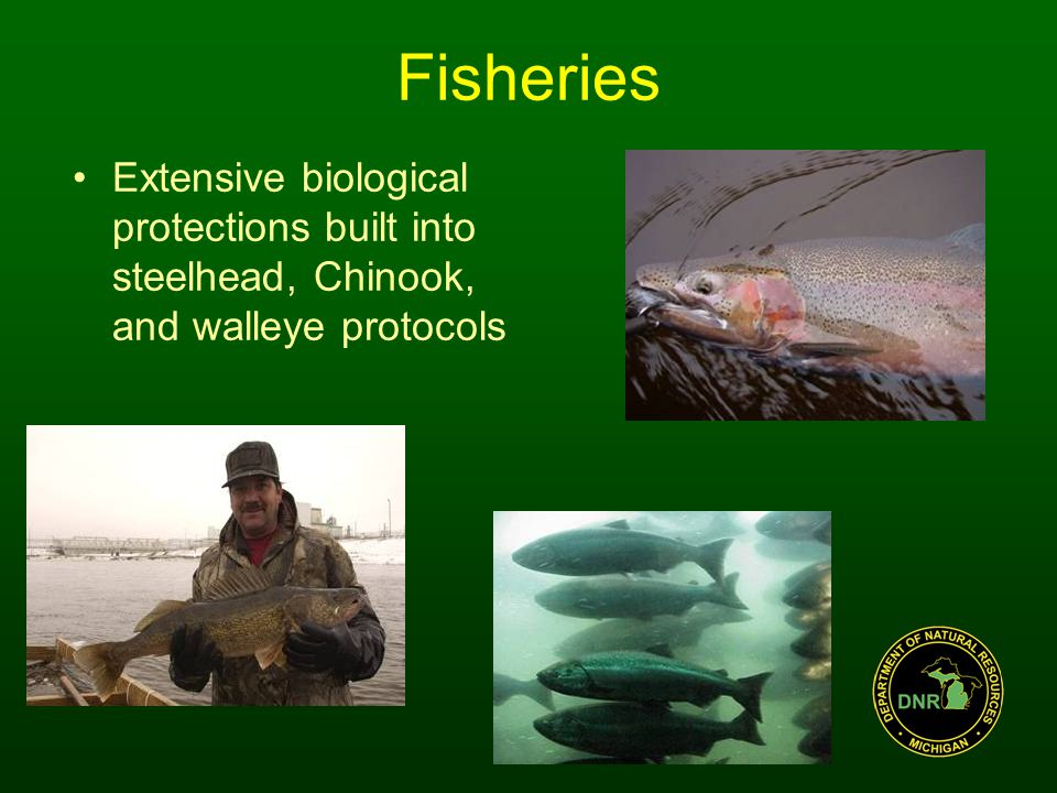Fisheries Extensive biological protections built into steelhead, Chinook, and walleye protocols