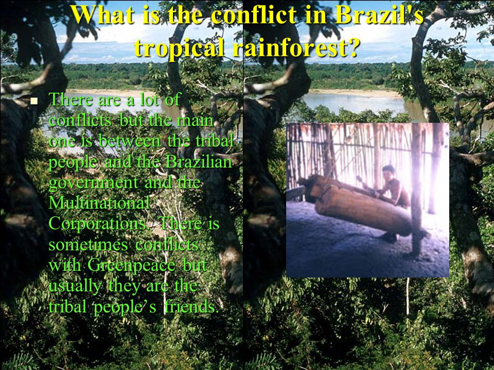 What is the conflict in Brazil s tropical rainforest.
