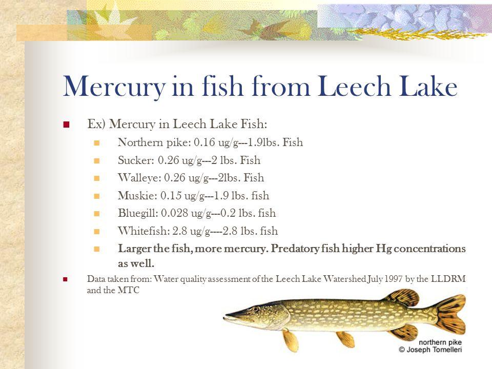 Mercury in fish from Leech Lake Ex) Mercury in Leech Lake Fish: Northern pike: 0.16 ug/g---1.9lbs.