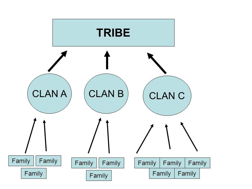 TRIBE CLAN ACLAN B CLAN C Family