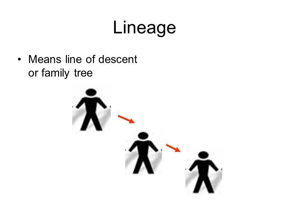 Lineage Means line of descent or family tree