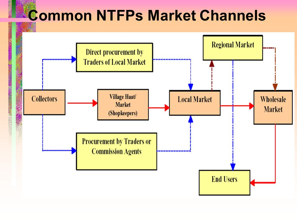 Common NTFPs Market Channels