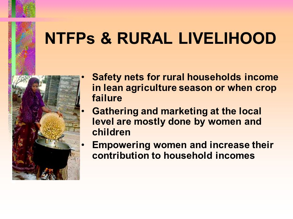 NTFPs & RURAL LIVELIHOOD Safety nets for rural households income in lean agriculture season or when crop failure Gathering and marketing at the local level are mostly done by women and children Empowering women and increase their contribution to household incomes