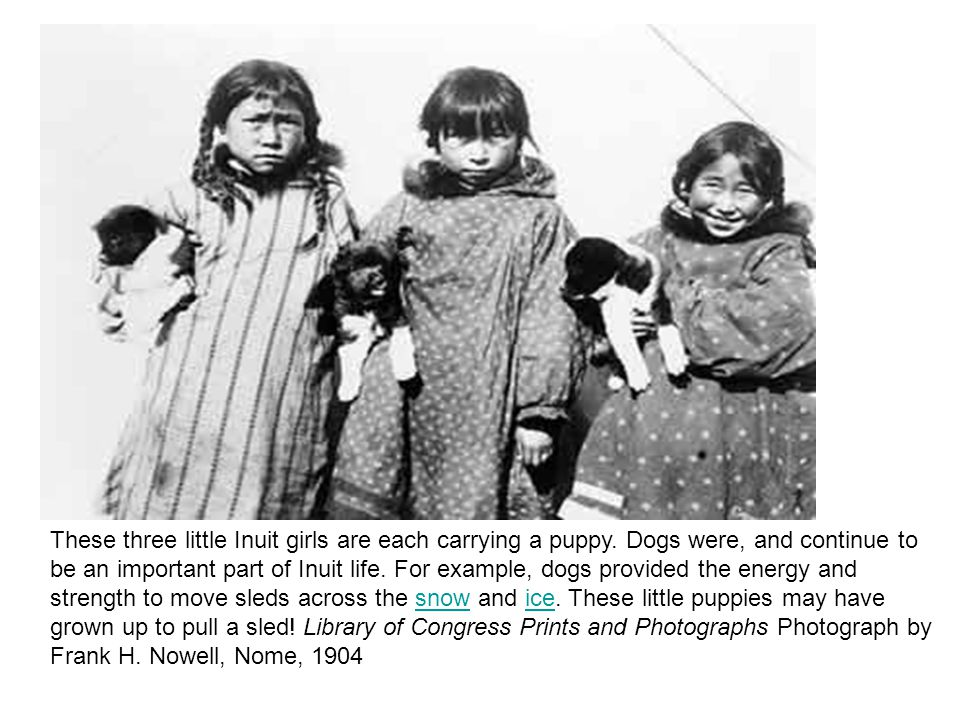 These three little Inuit girls are each carrying a puppy. Dogs were, and continue to be an important part of Inuit life. For example, dogs provided th