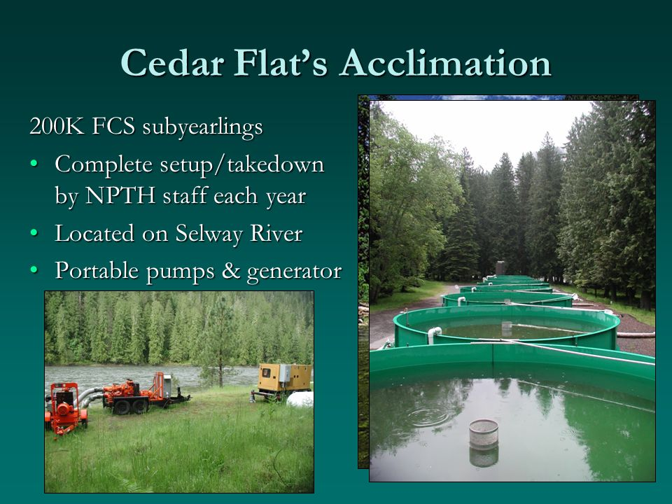 Cedar Flat's Acclimation 200K FCS subyearlings Complete setup/takedown by NPTH staff each yearComplete setup/takedown by NPTH staff each year Located on Selway RiverLocated on Selway River Portable pumps & generatorPortable pumps & generator