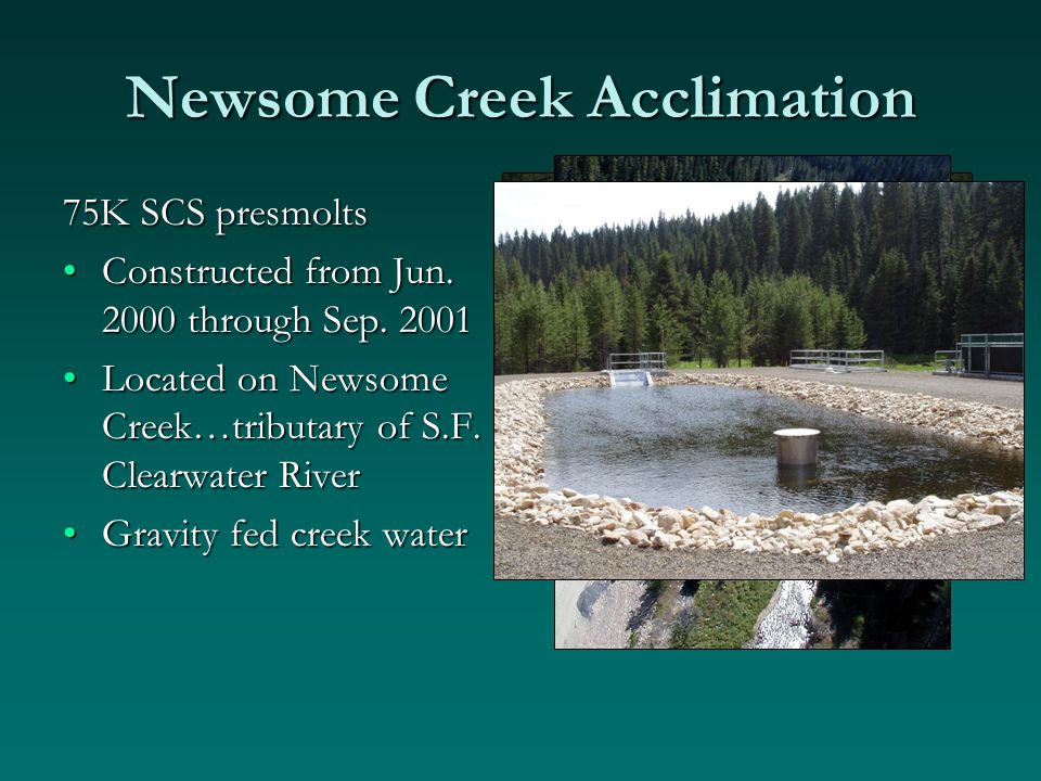 Newsome Creek Acclimation 75K SCS presmolts Constructed from Jun.