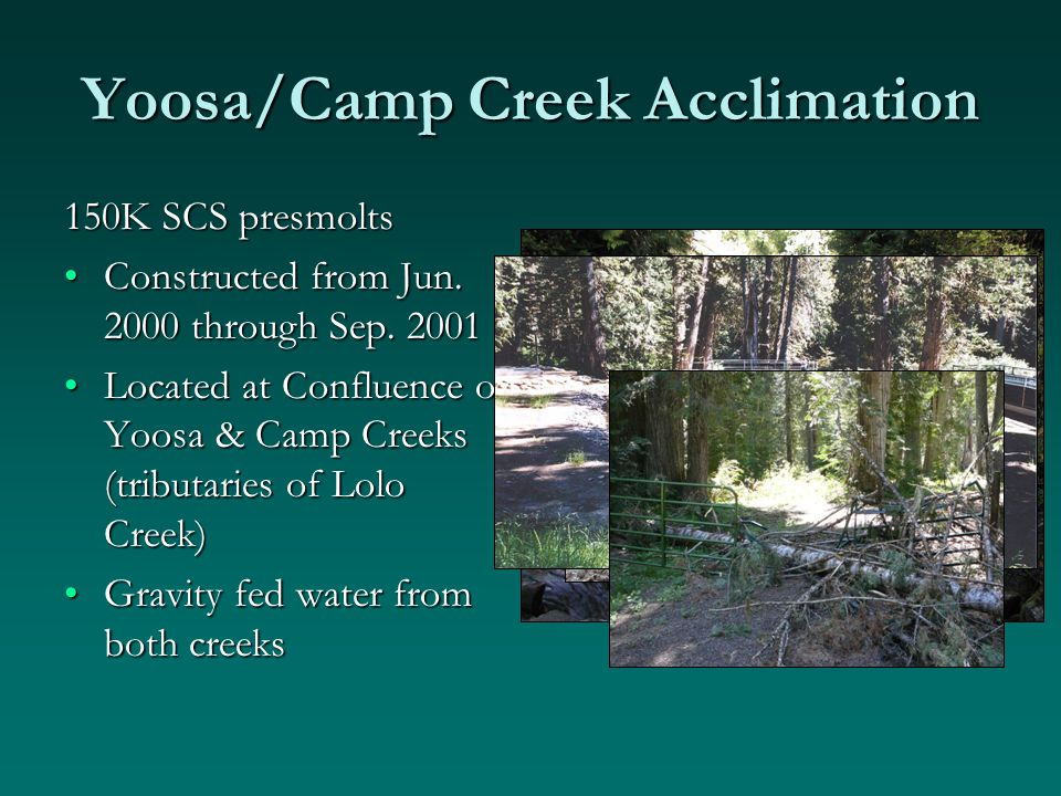 Yoosa/Camp Creek Acclimation 150K SCS presmolts Constructed from Jun.
