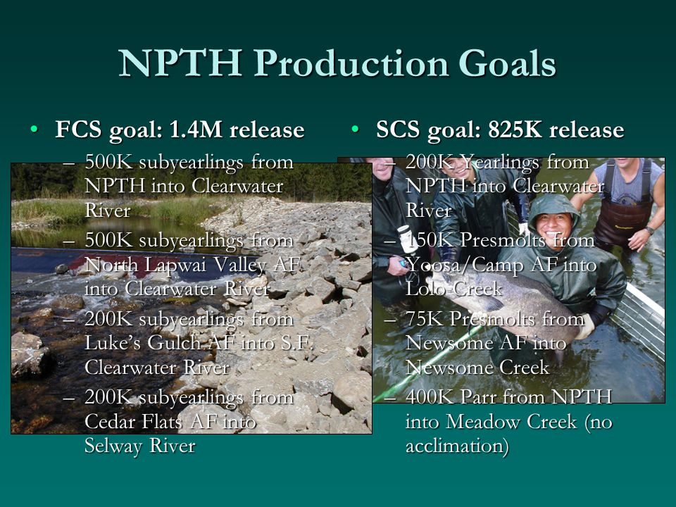 NPTH Production Goals SCS goal: 825K release –200K Yearlings from NPTH into Clearwater River –150K Presmolts from Yoosa/Camp AF into Lolo Creek –75K Presmolts from Newsome AF into Newsome Creek –400K Parr from NPTH into Meadow Creek (no acclimation) FCS goal: 1.4M releaseFCS goal: 1.4M release –500K subyearlings from NPTH into Clearwater River –500K subyearlings from North Lapwai Valley AF into Clearwater River –200K subyearlings from Luke's Gulch AF into S.F.