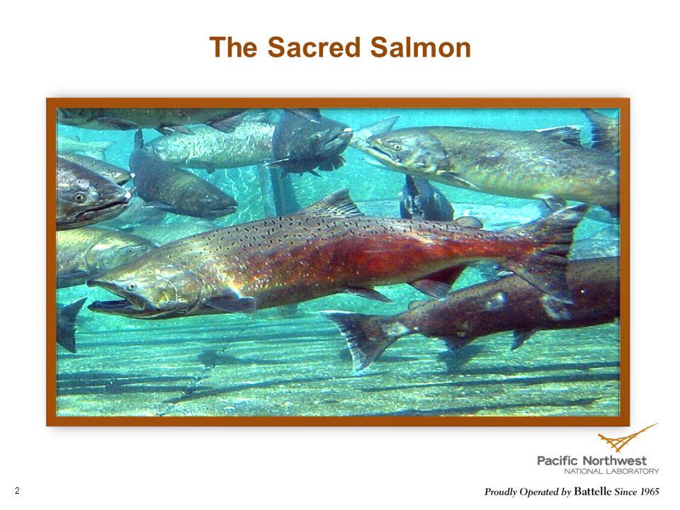 The Sacred Salmon 2