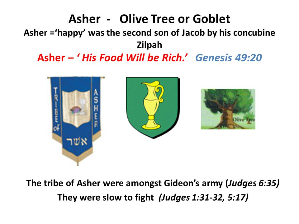 Asher - Olive Tree or Goblet Asher ='happy' was the second son of Jacob by his concubine Zilpah Asher – ' His Food Will be Rich.' Genesis 49:20 The tribe of Asher were amongst Gideon's army (Judges 6:35) They were slow to fight (Judges 1:31-32, 5:17)