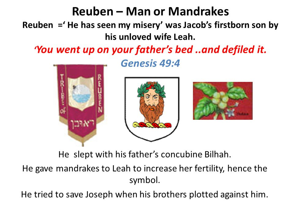 Reuben – Man or Mandrakes Reuben =' He has seen my misery' was Jacob's firstborn son by his unloved wife Leah.