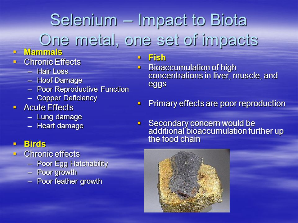 Selenium – Impact to Biota One metal, one set of impacts  Mammals  Chronic Effects –Hair Loss –Hoof Damage –Poor Reproductive Function –Copper Deficiency  Acute Effects –Lung damage –Heart damage  Birds  Chronic effects –Poor Egg Hatchability –Poor growth –Poor feather growth  Fish  Bioaccumulation of high concentrations in liver, muscle, and eggs  Primary effects are poor reproduction  Secondary concern would be additional bioaccumulation further up the food chain