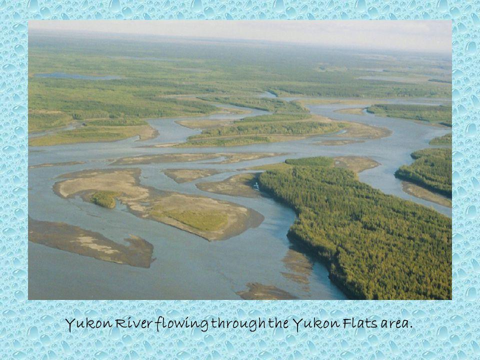Yukon River flowing through the Yukon Flats area.