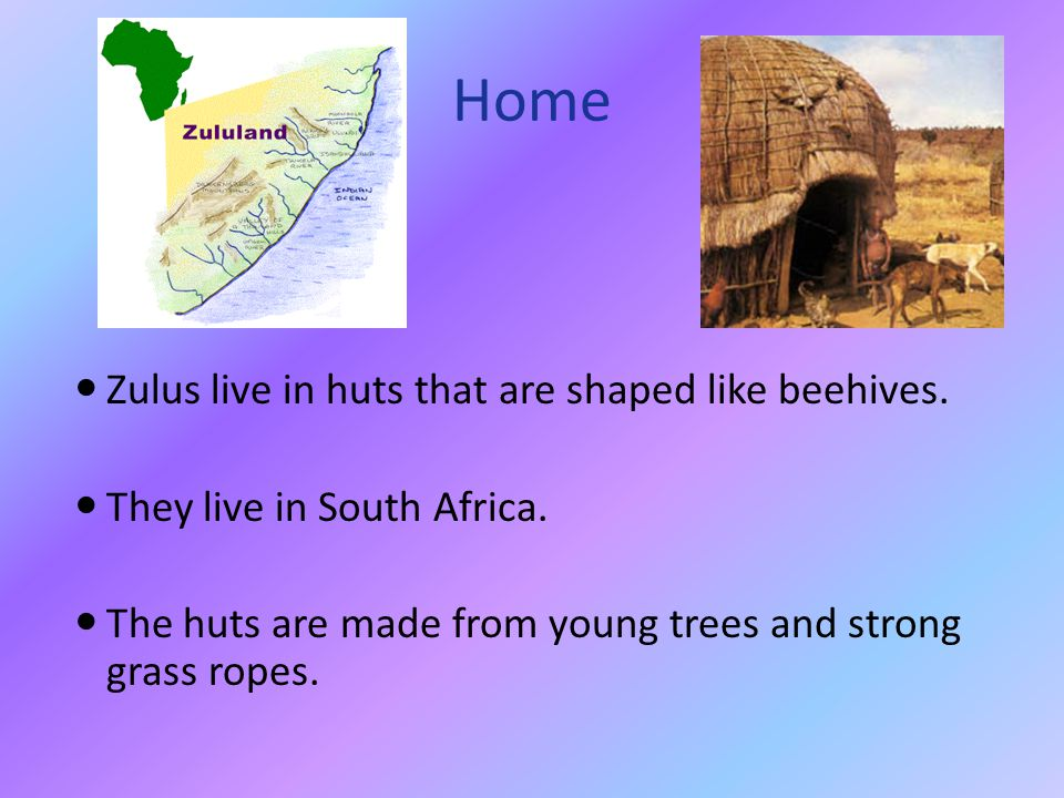 Home Zulus live in huts that are shaped like beehives.