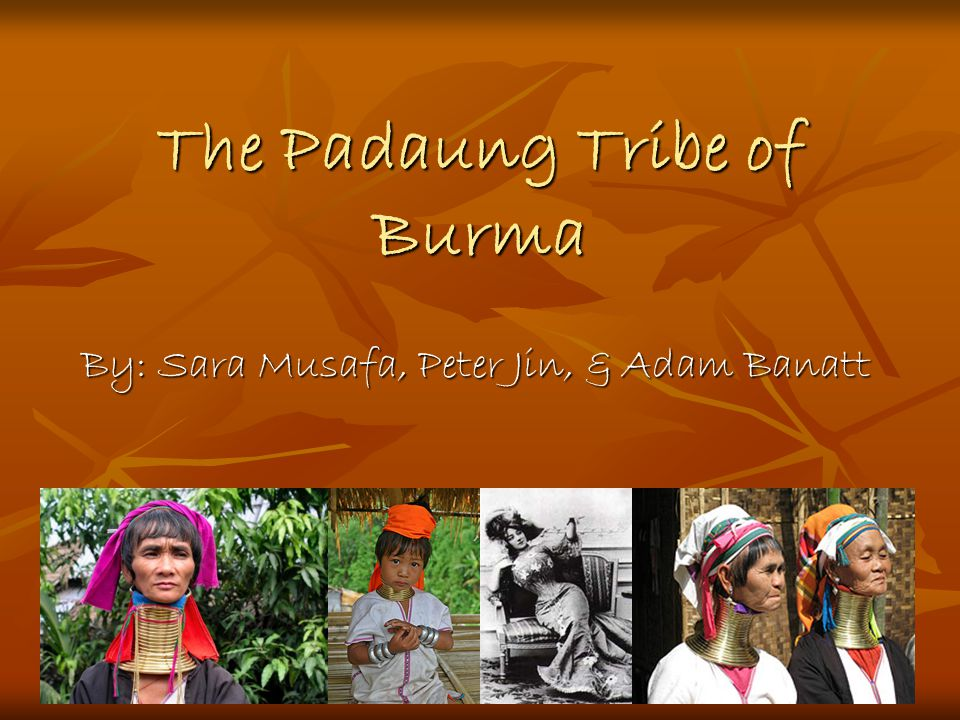 The Padaung Tribe of Burma By: Sara Musafa, Peter Jin, & Adam Banatt