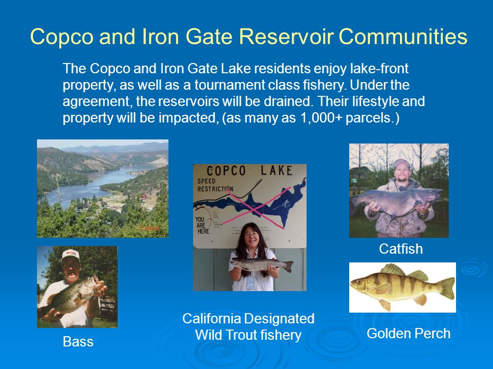 Copco and Iron Gate Reservoir Communities California Designated Wild Trout fishery Catfish Bass Golden Perch The Copco and Iron Gate Lake residents enjoy lake-front property, as well as a tournament class fishery.