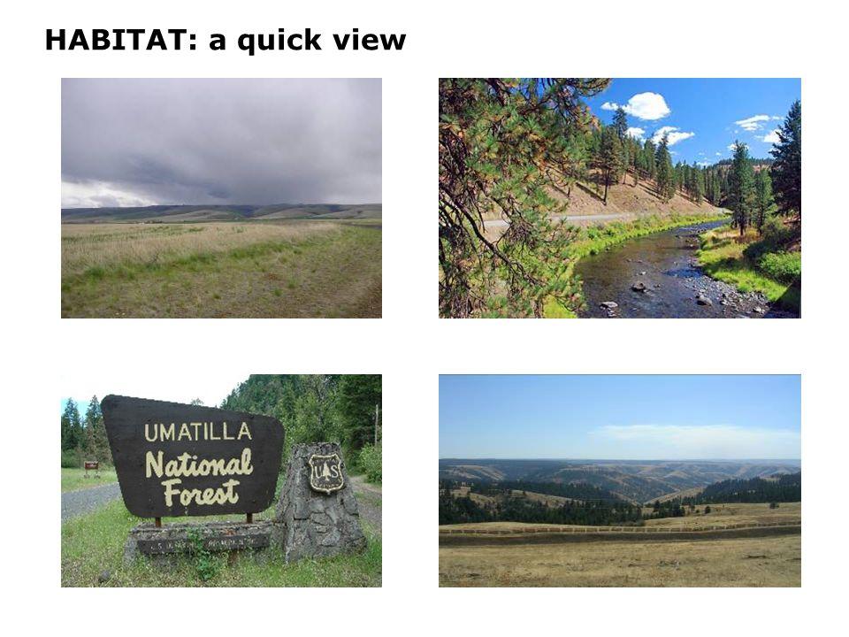 HABITAT: a quick view