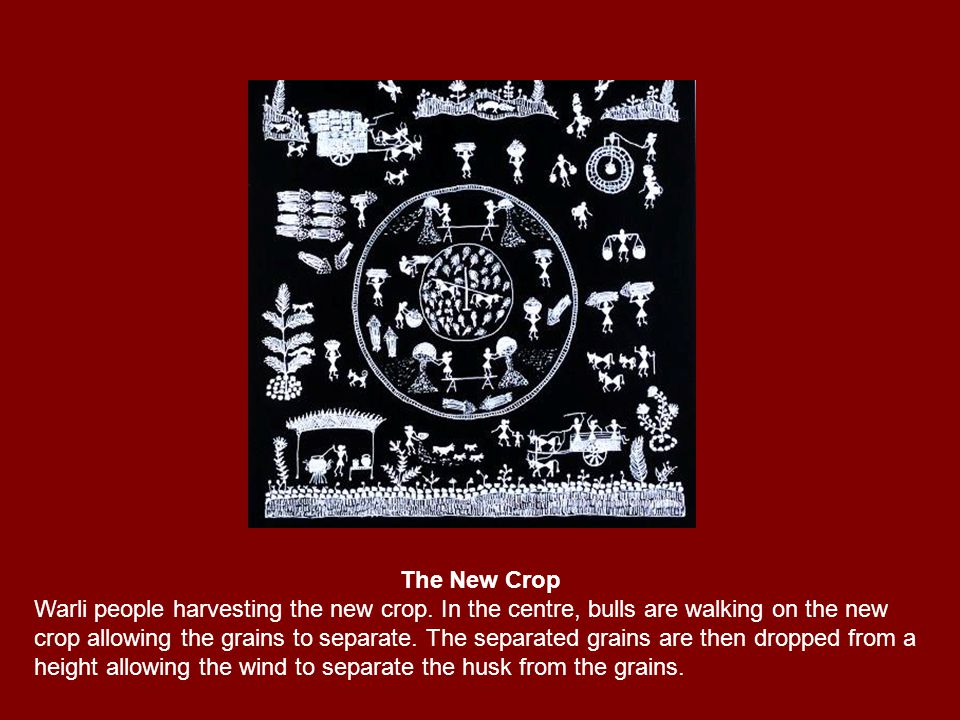 The New Crop Warli people harvesting the new crop. In the centre, bulls are walking on the new crop allowing the grains to separate. The separated gra